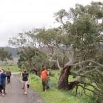 Koala sighting