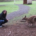 Tasmanian devil conservation park with kangaroos