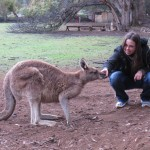 Close contact to a kangaroo at the tasmanian devil conservation park