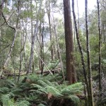 Forest Leven Canyon