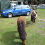 Ponies and our car
