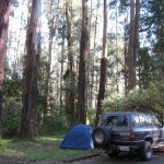 Our campsite at Grants Picnic Ground/Sherbrooke Forest, Dandenong Ranges