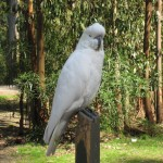 Cockatoo in the Sherbrooke Forest, Dandenong Ranges