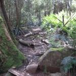 Sherbrooke Forest, Dandenong Ranges