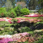 National Rhododendron Gardens of Victoria