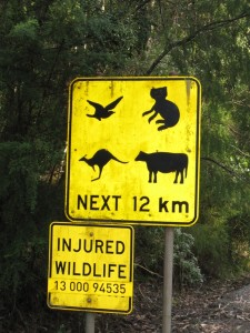 Birds, koalas, kangaroos .. and .. eh .. cows?