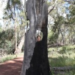 Cutie-tree at Wilpena Pound