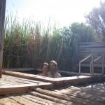 Awesome bath at Coward Springs