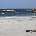 Seal Bay on Kangaroo Island
