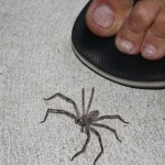 Spider one outside the common room