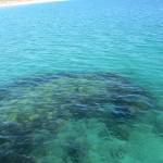 The reef hidden in the water