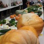 Vegetable competition? ; )
