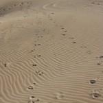 Emu steps