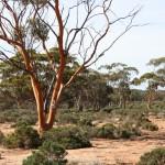 tall target-tree