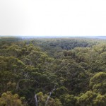 Panorama of the tree tops from Bicentennial tree