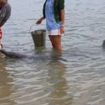 Feeding the dolphins - only a few were selected