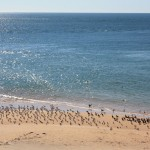 Seabirds, e.g. cormorants, at Cape Peron