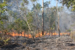 Controlled burnings in Litchfield NP