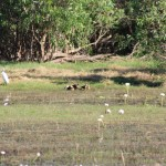 Birds at Anbangbang Billabong
