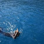 Shark alert