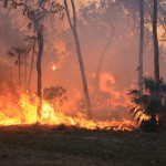 Bushfire in Litchfield