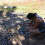 Cute Cutie and cute wallabie