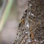 Tiny Green Ant near Mamukala