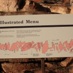 Aboriginal rock art: an illustrated menu