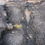 Ripple marks at Ubirr