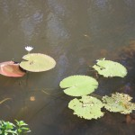 Impressions at Yellow Water Billabong