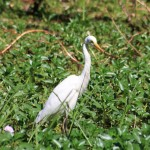 A crane at Yellow Water Billabong