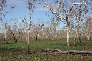 On the way to Gunlom Falls and out of Kakadu NP