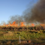 Pre-harvest sugar cane field burnings