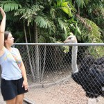 If this works with Emus does it work with Ostriches too? Hopefully! : )