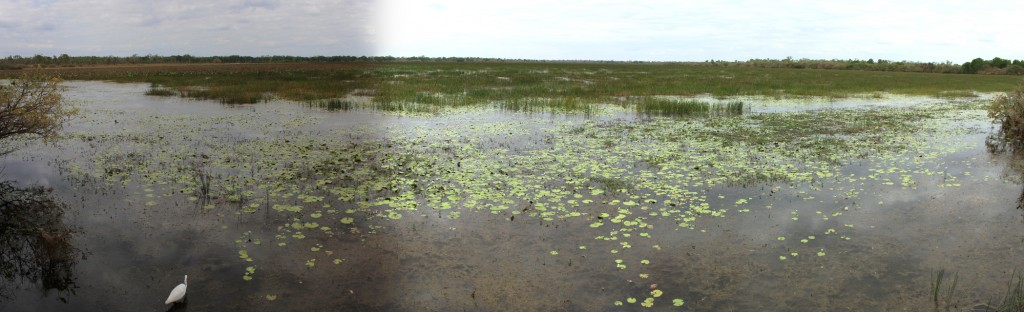 Panorama of Mamukala - where are the 100.000 magpie geese?