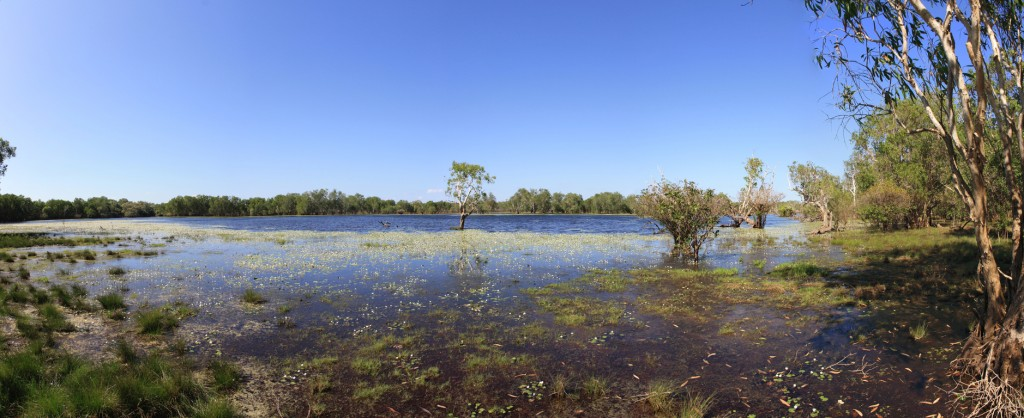 Panorama of Sandy Billabong