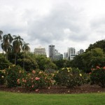 In the Royal Botanic Garden