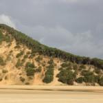 Loose edges on the sand dunes