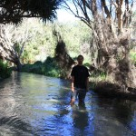 Wading through Eli Creek