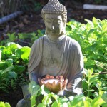 Buddha watching over herbs at the 'Funny Farm'