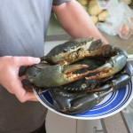 Successful catch: mud crabs, called muddies