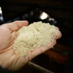 Raw sugar right from the production lane