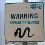 Snake alert!