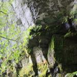 Moss Garden's mossy walls