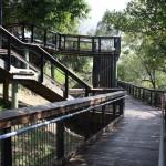 Boardwalk at Burnett River